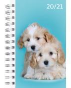 Compact Pets 20-21